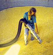 Canadian Companies looking to hire Grain Farm Work